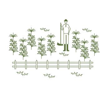 シニア農園