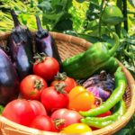 危険な野菜から身を守って健康を維持する方法【自分で育てるのが一番です】